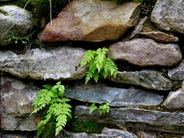 Fern Wall (Preview)