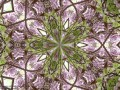 Abstract Wysteria (Thumbnail)