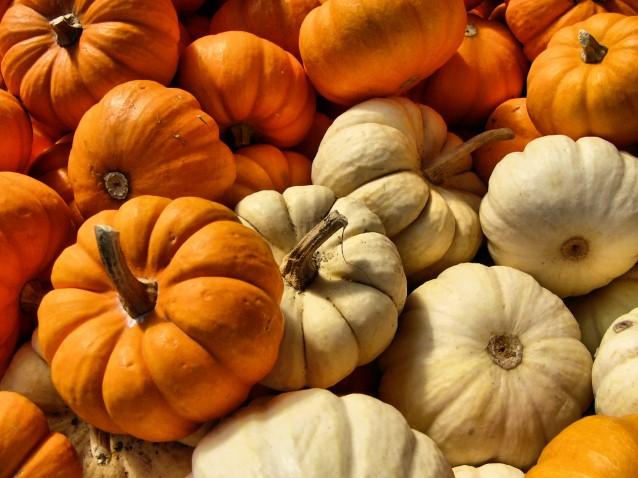 Orange And White Autumn Gourds Pete Brown S 10rem Net