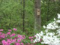 Birdhouse and Azaleas (Thumbnail)
