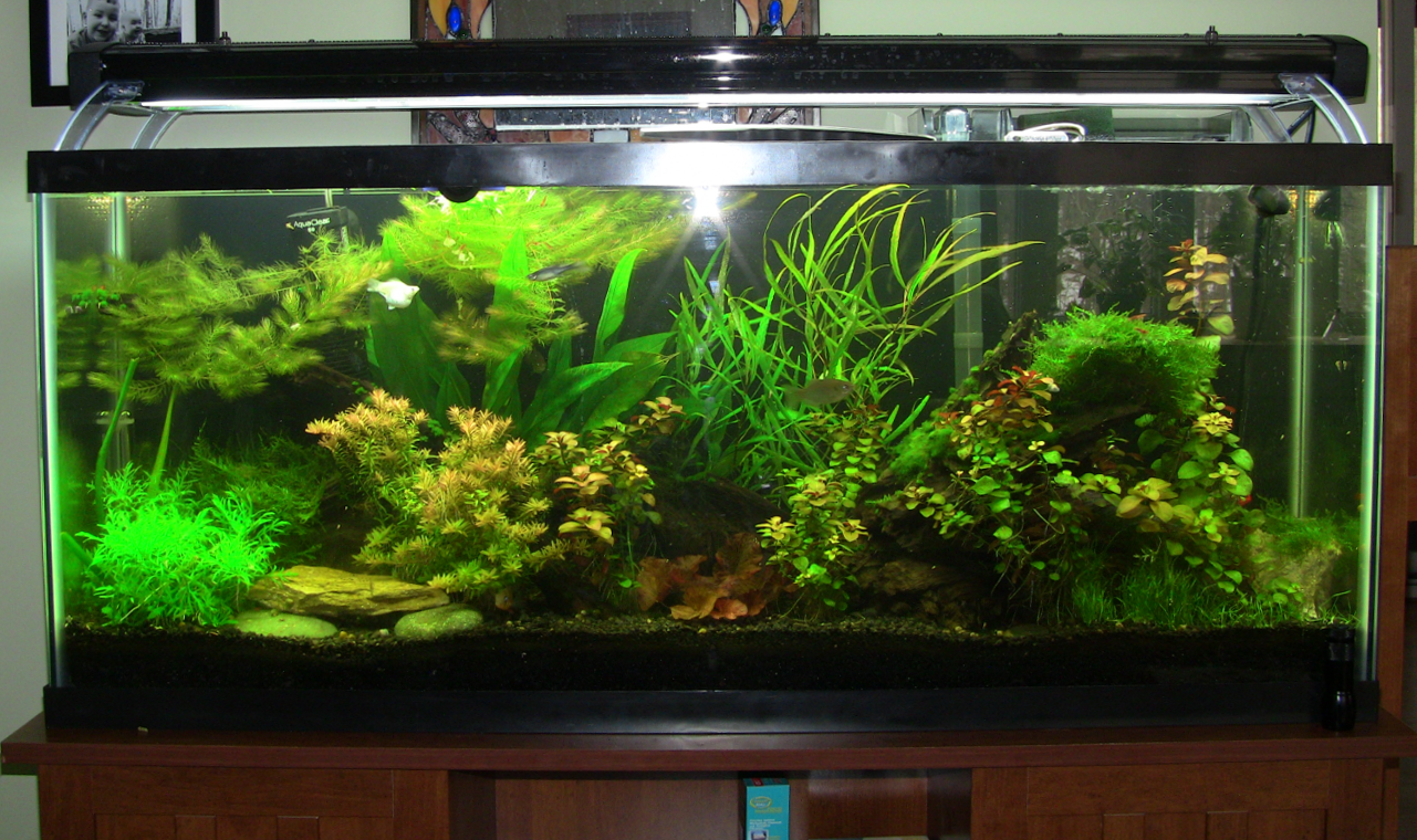 Best fish tank joy studio design gallery best design for Planted tank fish